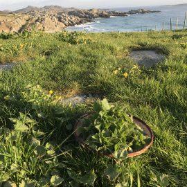 brennesle i hagen 2