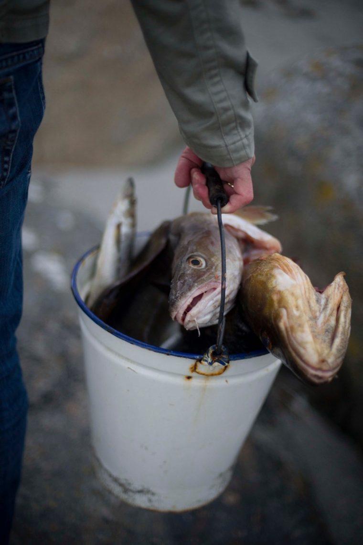 Om fisk, tran og miljøgifter