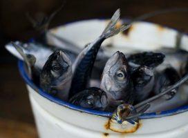 Kan vi ikke spise fisk heller nå?