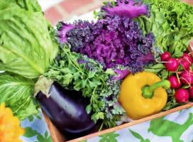 Live-kurs: mat som gjør godt for helsen