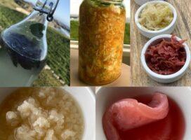 Nybegynnerkurs i fermentert drikke og fermentert mat
